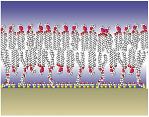 tethered bilayer membrane model