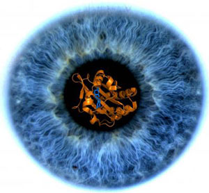 Image of the iris of researcher Clemens Heikaus' eye with a model of a GAF domain imbedded in the pupil