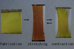 Chromism of Polymer 1 thin film before and after stretching