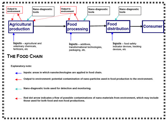Diagram on potential applications of nanotechnologies through a food chain from primary food production to consumption, which may require considerations on food safety aspects aimed at protecting the health of consumers