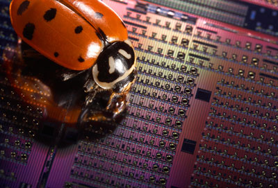 A ladybug crawls across an experimental Avalanche Photodetector chip containing silicon optical devices that are only a fraction of a millimeter