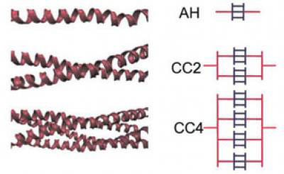 This figures illustrates the different arrangements of alpha-helical protein filaments and their schematic representation in the Buehler/Ackbarow model
