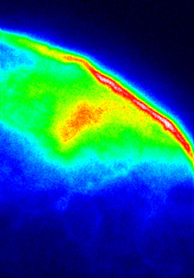 In this image, a tiny portion of a scale from a photonic beetle is viewed using a conventional fluorescence microscope