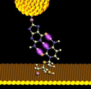 A gold probe, outfitted with a dangling nucleotide approaches its complementary base, protruding upward from a monolayer