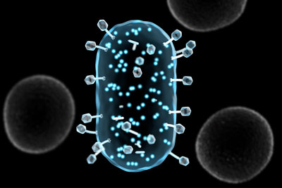phages infecting a target bacteria and generating light-emitting proteins