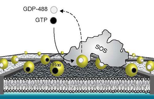 supported membrane array experimental setup