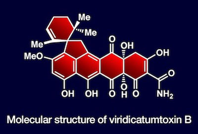 Synthesis produces new natural antibiotic
