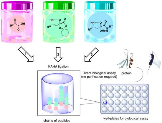 Synthetic fermentation of bioactive non-ribosomal peptides
