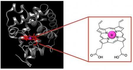 artificial metalloenzyme