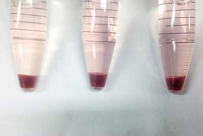 Red blood cells grown from stem cells