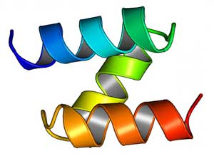 A model of a computationally designed mini-protein from a large-scale study to test structural stability