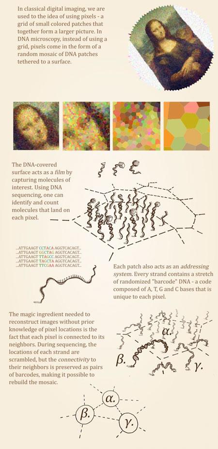 New method for imaging biological molecules