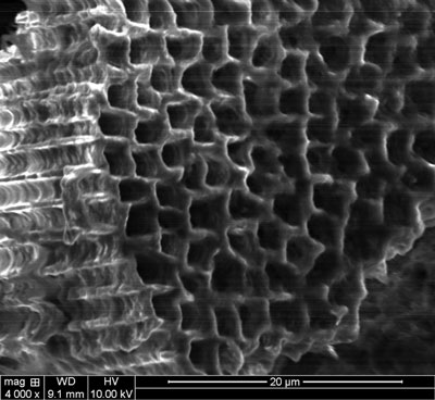 A sponge formed from a solid wafer of silicon