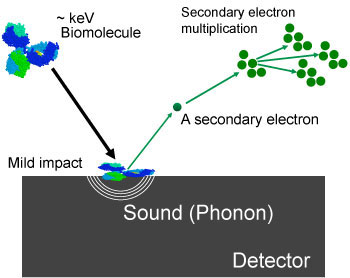 Difference between conventional ion detection and superconducting ion detection