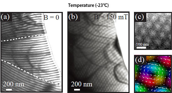 Magnetic structure observed by Lorentz transmission electron microscopy