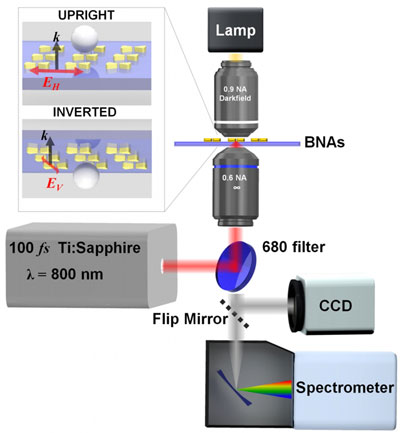 Experimental setup schematic showing laser source, microscope, and imaging detector and spectrometer