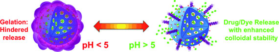 functionalization of protein-based nanocages for drug delivery applications