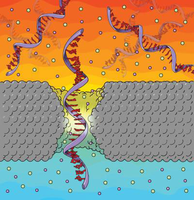 Silicon Nitride Nanopore Translocation