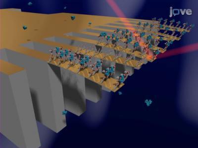 Cantilever Sensory Array Visualization