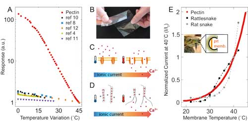 Comparison between artificial skins, snakes' pit membrane and pectin films