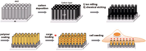 A schematic illustration of the construction of carbon nanosyringe arrays and their use in cellular delivery of cargo