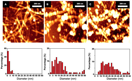>AFM images and diameter histograms of CSA-doped PANI coated SWNT networks as a function of deposition time