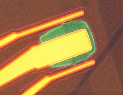 Optical microscopy image of the top-gated graphene transistor