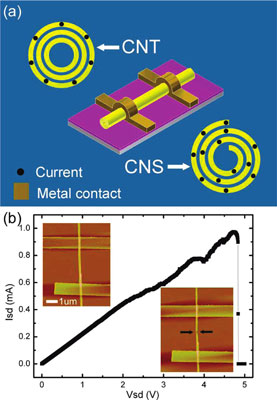 graphene, multi-walled carbon nanotube, carbon nanoscroll
