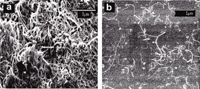 DNA-encased maulti-walled carbon nanotubes (right)