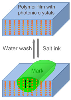 Schematic illustrations of the structure of