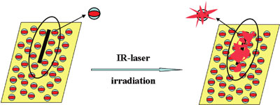 Scheme of the inhibitor release after local laser irradiation explaining the healing of the defect