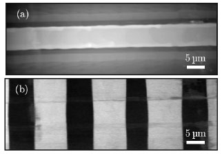 Topography and simultaneously recoded piezoresponse  of a titanium implanted waveguide in a periodically poled lithium niobate (PPLN) crystal