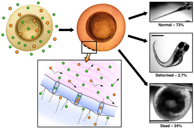 Immobilization of a single 90 nm diameter gold nanoparticle with the NanoPen