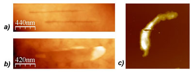 Fine nanosurgical incisions on the surface of a fixed megakaryocyte cell, performed using a nanoscalpel probe and imaged with AFM
