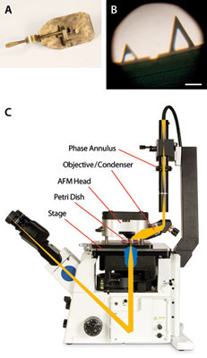 optical microscopes and AFM