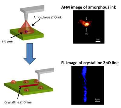 Schematic of biomimetic crystallization nanolithography