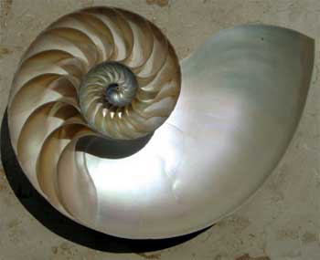 The iridescent nacre of a Nautilus shell cut in half