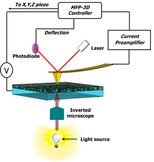 Schematic diagram of photoconductive AFM (pcAFM) setup with the MFP-3D AFM
