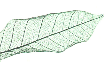 A magnetic leaf