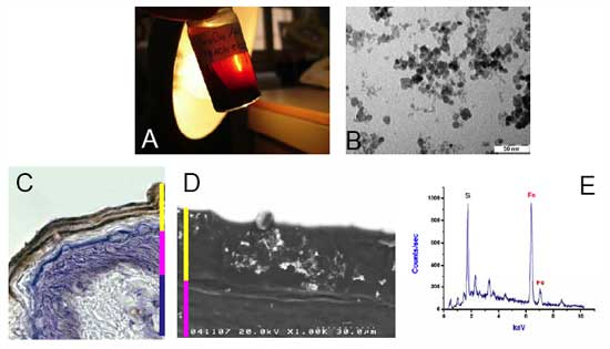 Nanoparticle characterization and recovery within human skin after few hours of contact