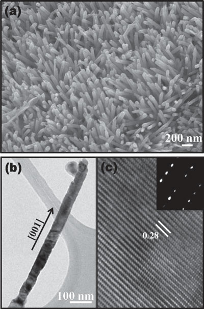 zinc oxide nanorids grown on paper