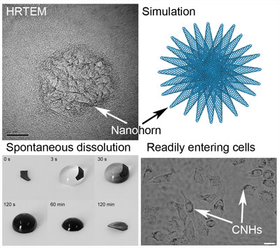 Carbon nanohorns for intracellular delivery