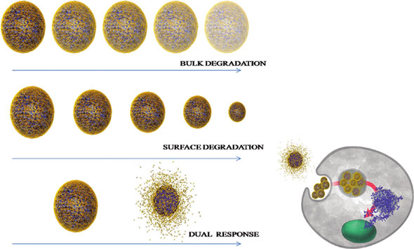 Different release profiles from nanoparticles result in different cellular response