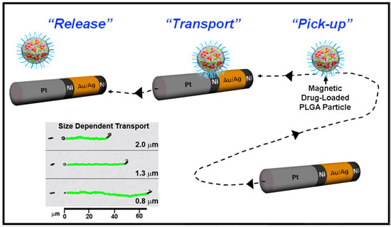 Translocation of model drug carriers by catalytic nanowire motors