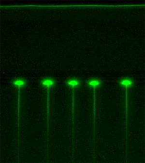 Flow of fluorescein molecules through an array of tunable elastomeric nanochannels