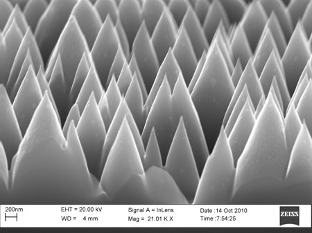 SEM image of the nanostructured non-reflective silicon surface
