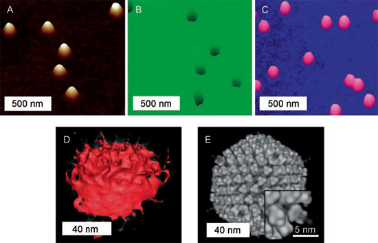 Molding and replication of adenovirus particles