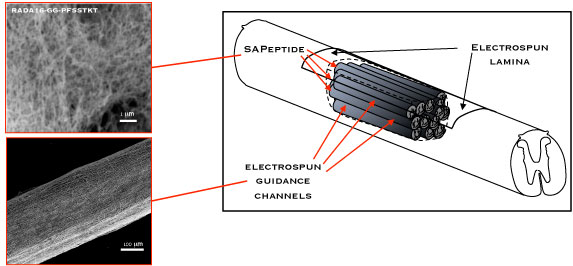 Schematic diagram of the production and transportation of photoelectron in a nanotube fiber solar cell