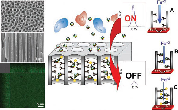 Protein sensing technology using an anodized aluminum oxide nanoporous membrane