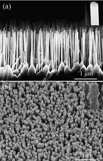 SEM images of (a) well-aligned ZnO nanowire array and (b) well-aligned ZnO/ZnSe core/shell nanowire array